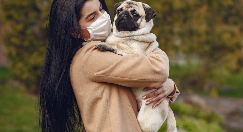 cachorro pega coronavirus